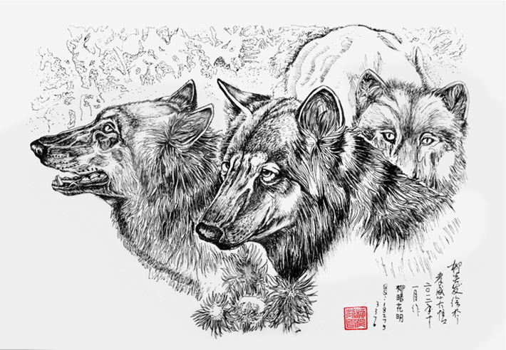 狼的简易铅笔画图片