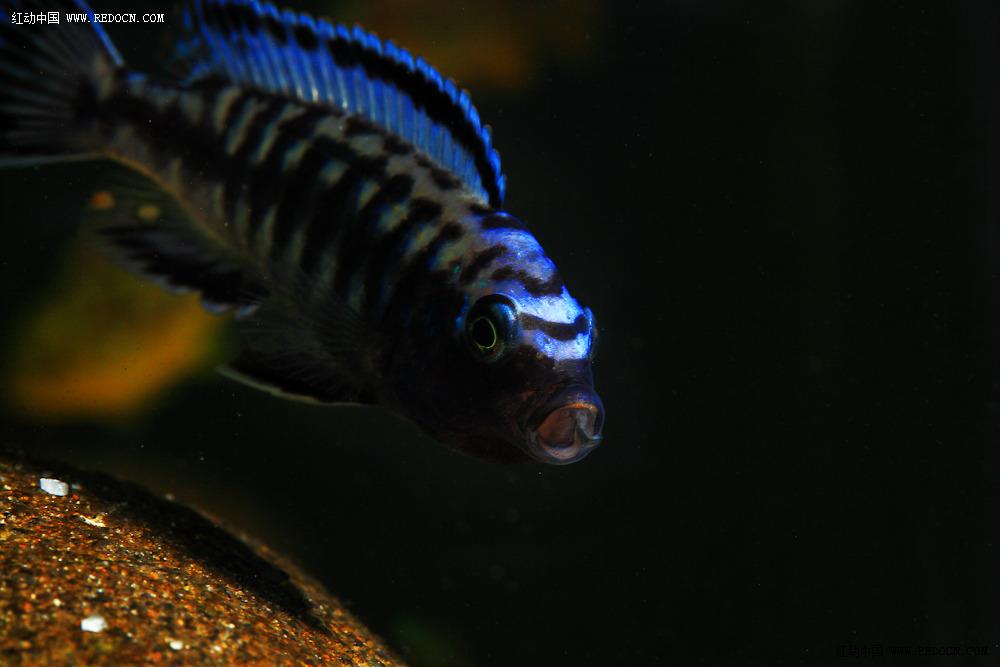 东海经常能捕到的食用鱼你都知道哪些?(上