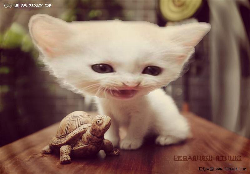 壁纸 动物 狗 狗狗 猫 猫咪 小猫 桌面 800_558