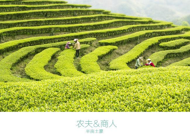 半亩茶园 (1).jpg