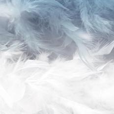 北欧风后现代羽毛壁纸